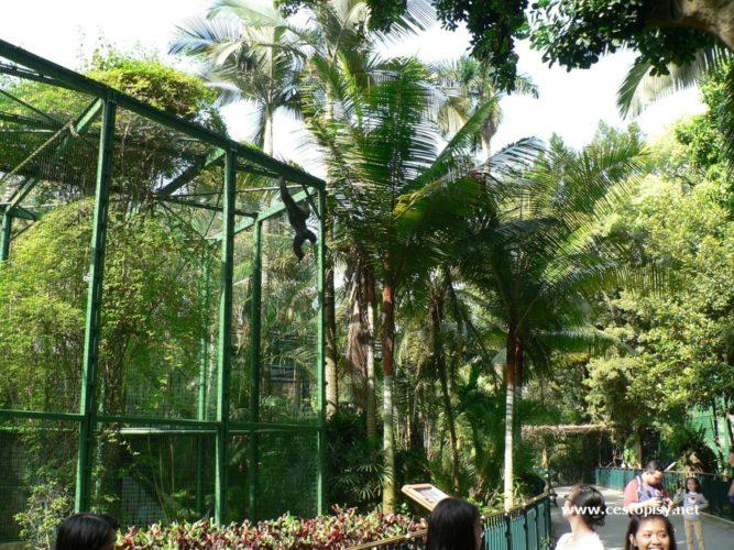 Čína - Hongkong – městské parky, zoologická a botanická zahrada