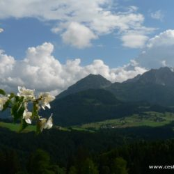 Rakousko - Dovolená na rakouském statku neboli Bauernhofu