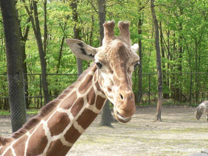 Zoo Brno Bystrc