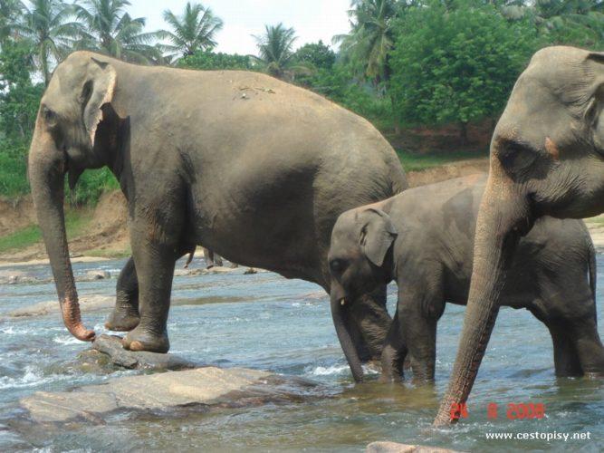 Srí Lanka studentskýma očima
