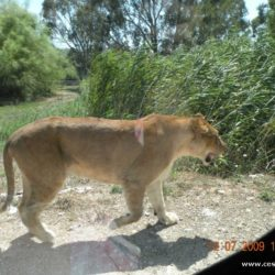 Park Vergel – netradiční safari s příchutí adrenalinu