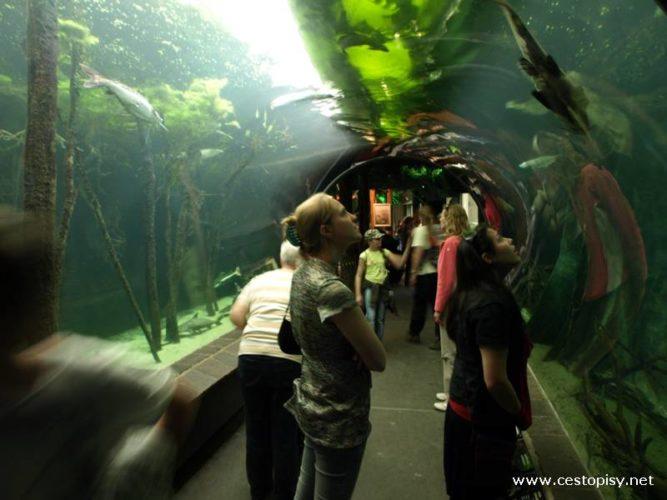 Rakousko - Vídeň - Zoo Schönbrunn je opravdu nádherná