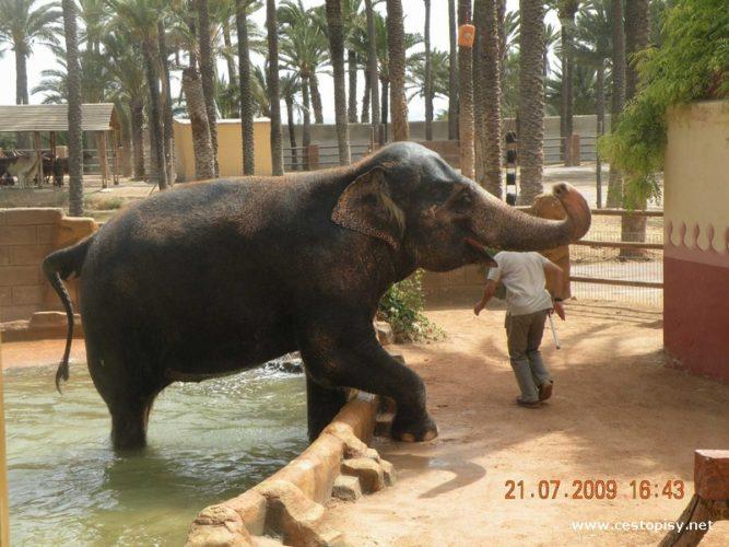 Rio Safari Elche –  to je zoologická zahrada mezi palmami