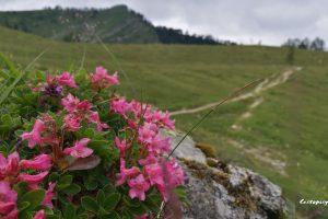 Salcbursko – Postalm je nejen vysokohorská panoramatická silnice