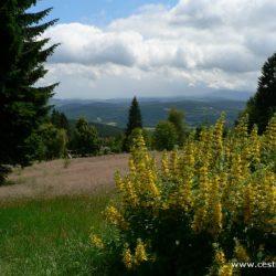 Šumava - Javorník a Klostermannova rozhledna