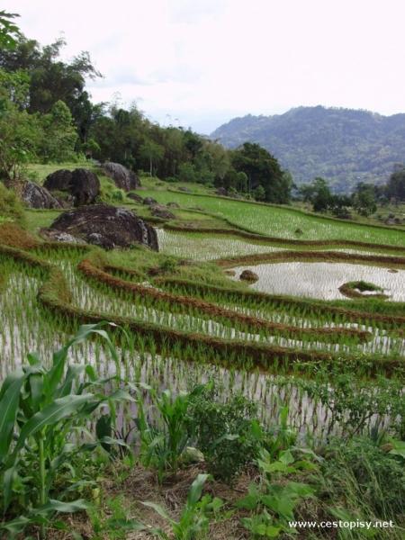 Sulawesi3