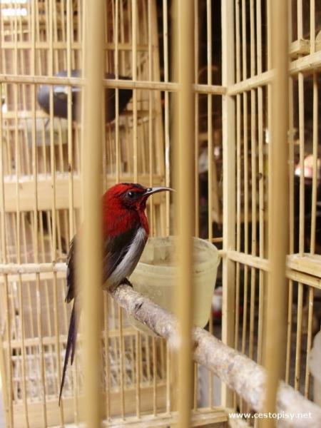 Ptaci trh