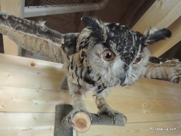 Borová Lada - sovy