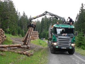 Šumava - těžba dřeva