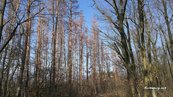 Uschnutý les
