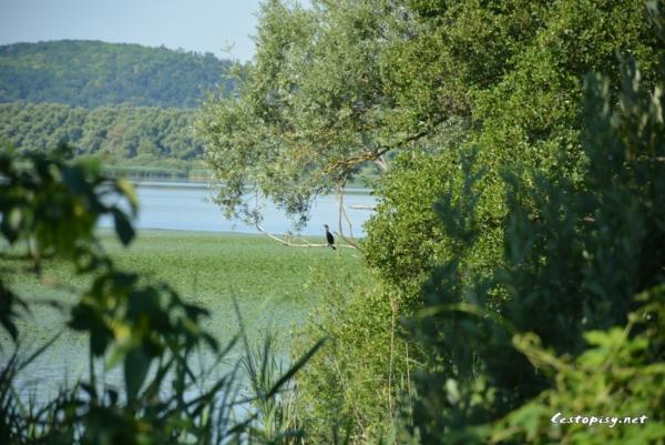 Jezero Kis-Balaton - Malý Balaton