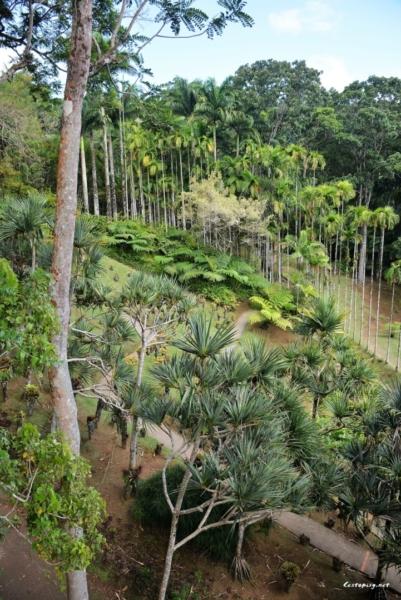 Martinik - Balata