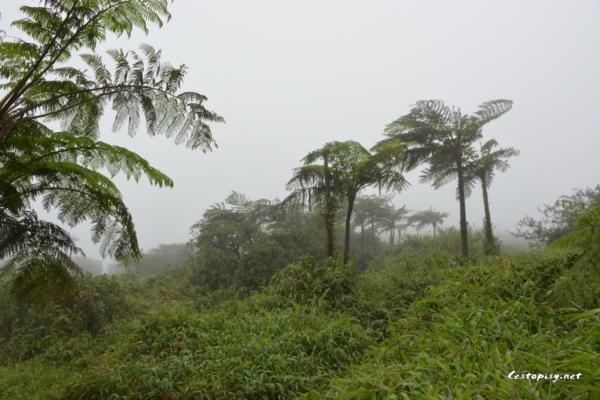 Martinik