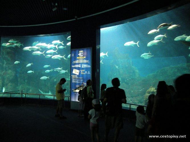 Valencie - Oceánografické muzeum ohromí každého