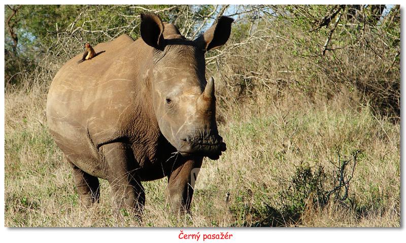 Jihoafrická republika - Za lvy (a deštěm) do Kalahari